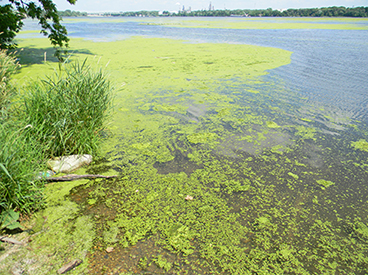Municipalities checking water for blue-green algae